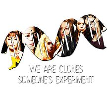 Someone's Experiment || Orphan Black by linked-pinkies