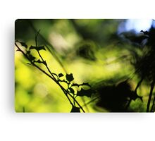 Tunnel of Light - Holly Wood Bokeh Canvas Print