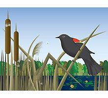 Red Wing Black Bird Perched on Reed in Wetland Marsh  Photographic Print