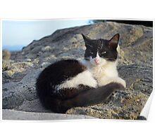 Meteora Cat Poster