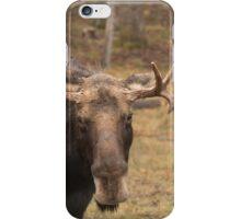 Bull moose in a fall landscape iPhone Case/Skin