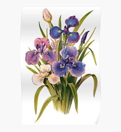 Japanese Irises Poster