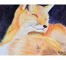Sweet Fox Photographic Print