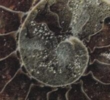 ammonite supermacro Sticker