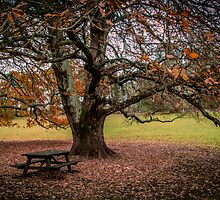 The Park Bench by Pink Poppy  Photography