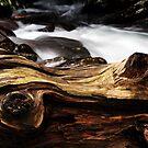 Fallen Beauty by Terri~Lynn Bealle