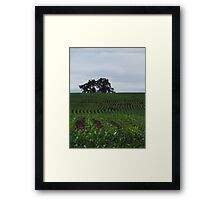 Knee High by the Fourth of July Framed Print