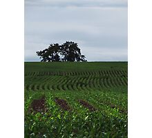 Knee High by the Fourth of July Photographic Print