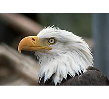 Eagle Eye Photographic Print