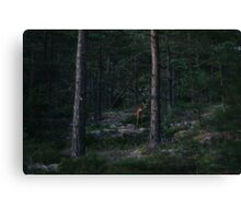 Deer encounter on Brommö Canvas Print