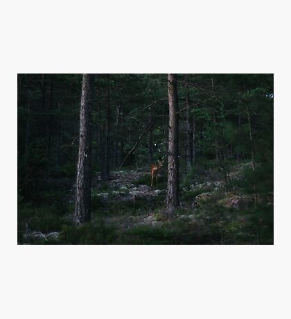 Deer encounter on Brommö Photographic Print