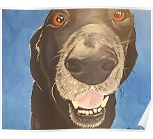 Russell the Black Lab Poster