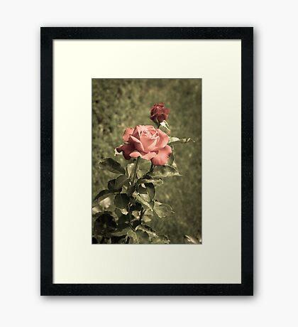Garden of Roses Framed Print