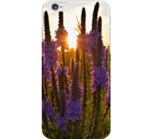 Looseleaf Sunset 2 iPhone Case/Skin