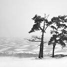 Winter Landscapes 1 by JuliaPaa