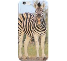 Zebra - African Wildlife Background - Funny Nature iPhone Case/Skin