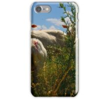 Pecore, Val D'Orcia, Tuscany, Italy iPhone Case/Skin