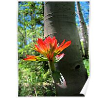 Indian Paintbrush and Aspen Poster