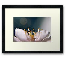 Almond flower macro close up harmony Framed Print