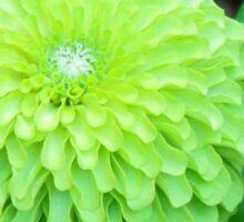 Lime Color Flower Sticker