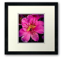 Flower 8 Framed Print
