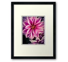 Flower 10 Framed Print