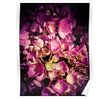Flowers 2 Poster
