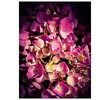 Flowers 2 Photographic Print