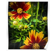 Flowers 3 Poster