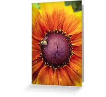 Shoo Fly Greeting Card