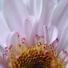 Angel Wings flower by Sunshinesmile83