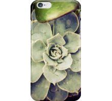 Succulents 2 iPhone Case/Skin