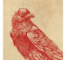 Red Raven  Photographic Print