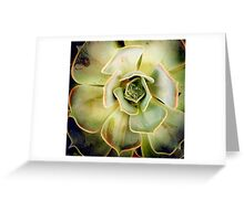 Succulents 6 Greeting Card