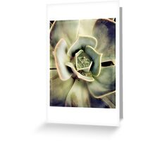 Succulents 7 Greeting Card