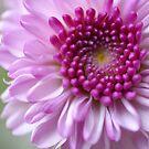 Royal Petals by Sunshinesmile83