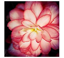 Pink Beauty Photographic Print