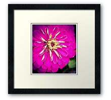 Flower 12 Framed Print