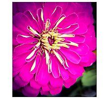 Flower 12 Photographic Print