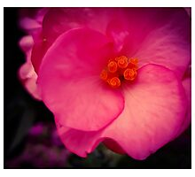 Pink Spiral Photographic Print