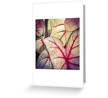 Pink Foliage Greeting Card