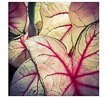 Pink Foliage Photographic Print