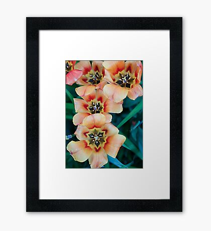 5 is a Crowd Framed Print