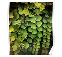 Waterfall of leaves Poster