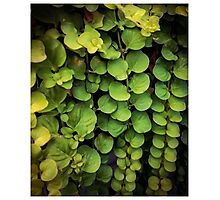 Waterfall of leaves Photographic Print