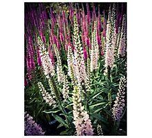 Flowers 5 Photographic Print