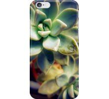 Succulents 8 iPhone Case/Skin