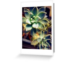 Succulents 8 Greeting Card