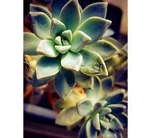 Succulents 8 Photographic Print
