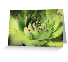 Succulents 11 Greeting Card